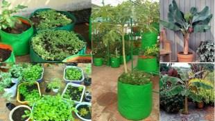 Terrace grading tamil news How to prepare home garden and terrace garden