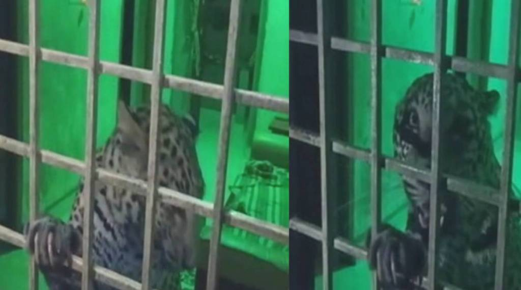 cheetah enters in house, leopard enters in house near gudiyatham, வீடு புகுந்த சிறுத்தை தாக்கி 3 பேர் காயம், நள்ளிரவில் வீட்டுக்குள் புகுந்த சிறுத்தை, வேலூர், குடியாத்தம், கலர்பாளையம், kalarpalaiyam, vellore district, cheetah attacks 3 person injuries gudiyatham, cheetah attacks 3 person injuries