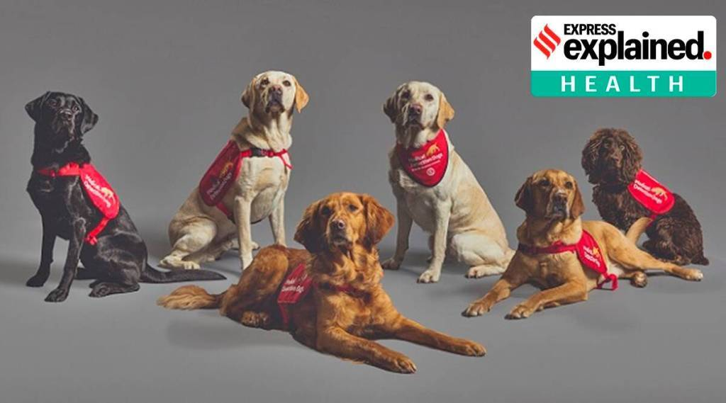 Corona Virus Test Dogs Research Tamil News