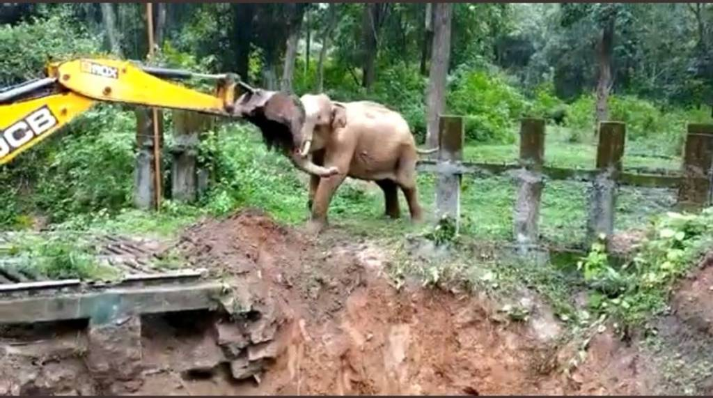 Trending viral video of Elephant fighting with JCB loader after rescued from muddy ditch