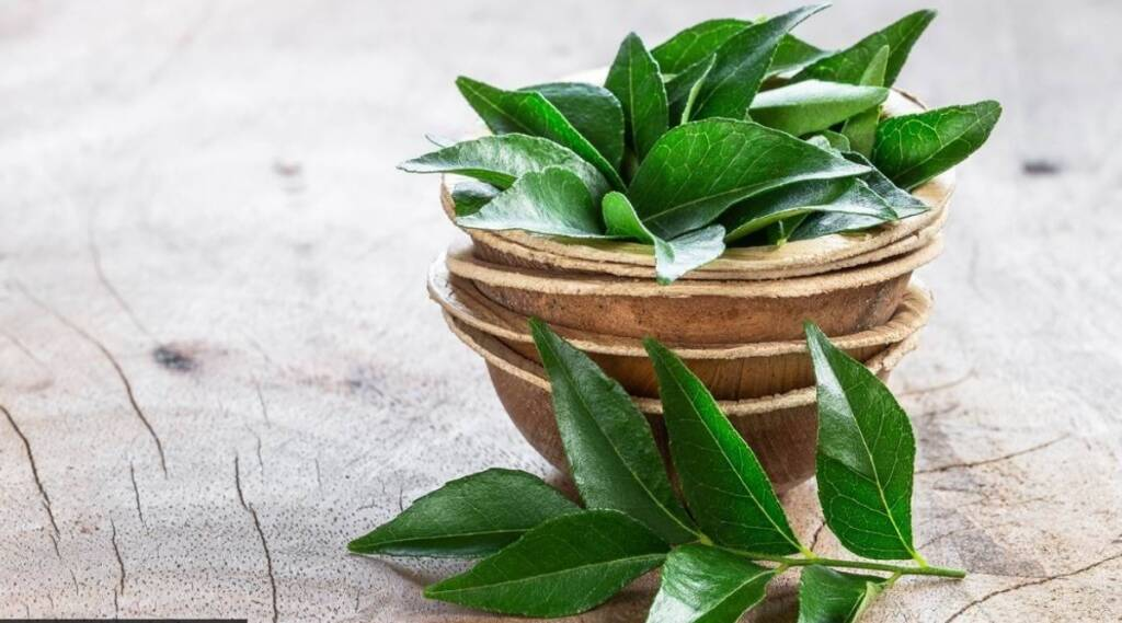 Healthy food Tamil News: Health benefits of curry leaves in tamil