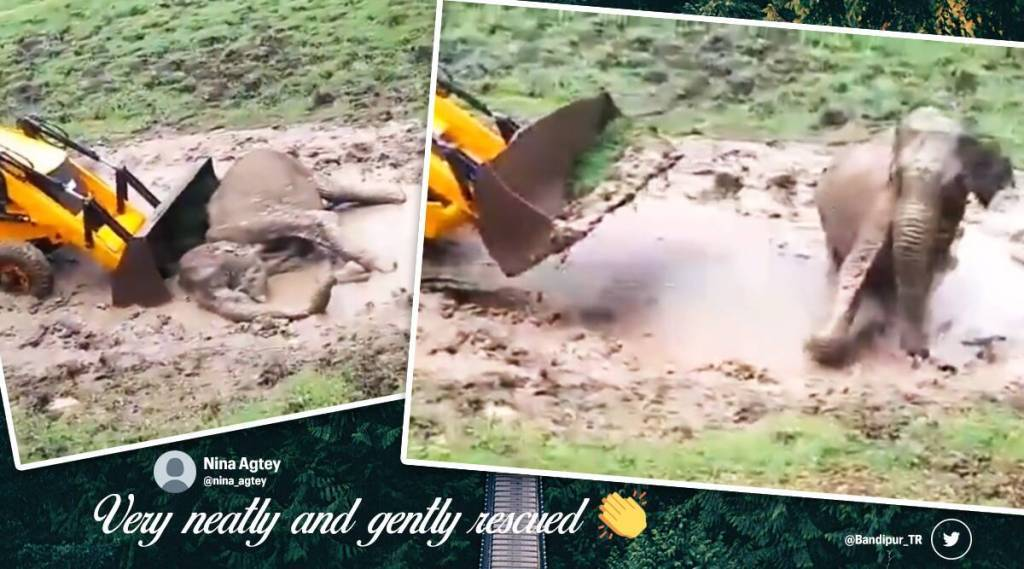 'Good work team': Officials rescue elephant calf stuck in mud puddle in Bandipur Reserve