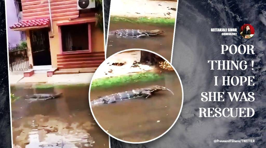 Cyclone yaas, yaas cyclone tornado, monitor lizard