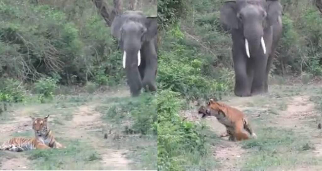 Elephants viral video, elephant cute viral videos,