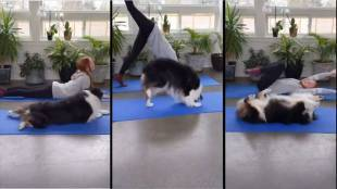 Trending viral video of dog perfectly mimicking owner during yoga session