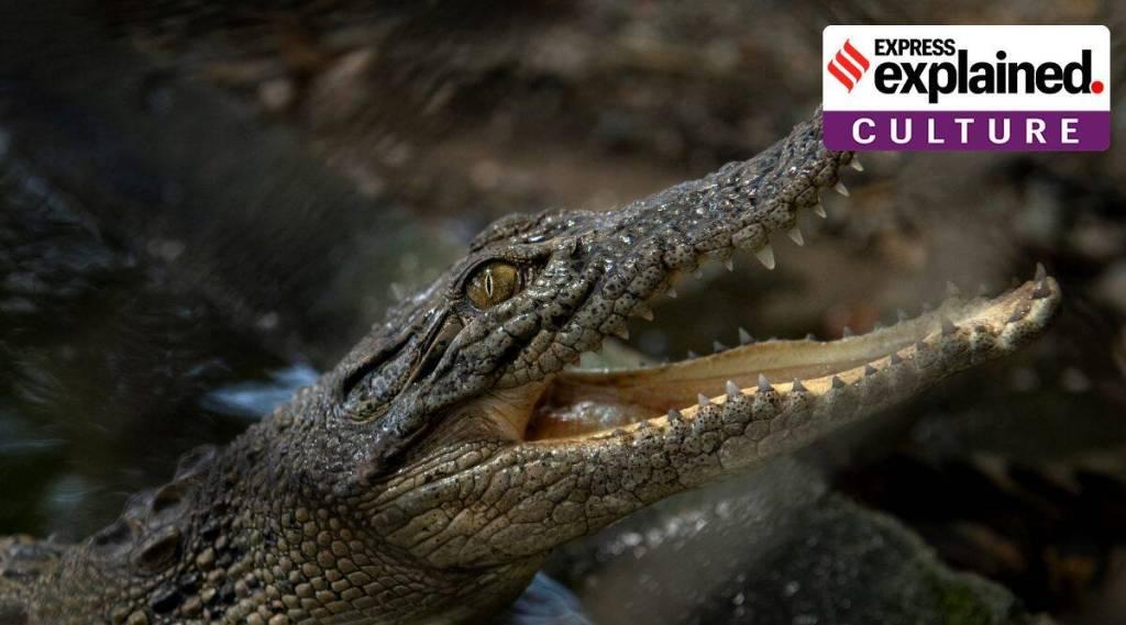 The science and myth behind crocodiles tears