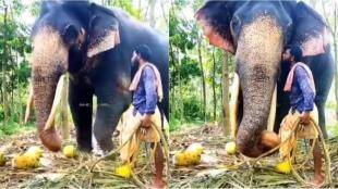 elephant video, elephant kiss video, elephant receives kiss from its caretaker, யானை வீடியோ, யானை முத்தம் வாங்கும் வீடியோ, வைரல் வீடியோ, viral video, tamil viral news, tamil viral video news, elephant viral video news