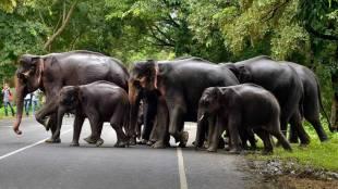 Viral news Herd of 18 Indian elephants die