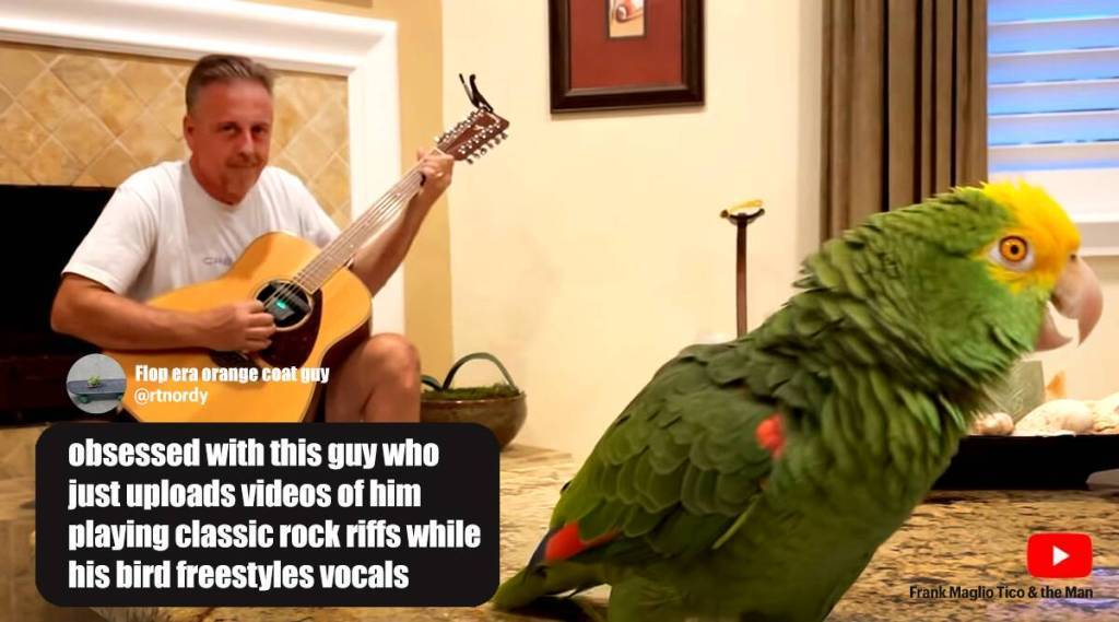 Trending viral video of parrot singing rock classics, viral videos, viral, trending viral videos