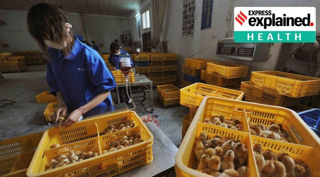 H10N3 bird flu detected in human