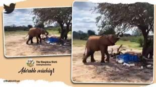 Trending viral video of elephant t