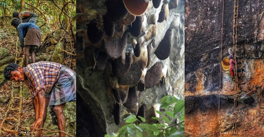 Annual Cliff hunting, Nilgiris, Annual honey hunting, Annual honey gathering, Nilgiri tribes