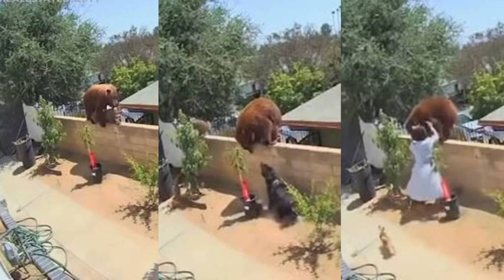 Trending viral video of 17-yr-old girl fights off a bear