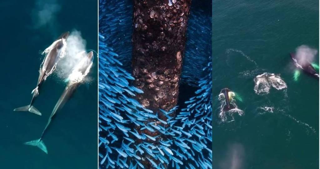 Ocean week 2021 Trending viral video of ocean creatures, viral news, tamil viral news, tamil viral videos, viral videos of the day