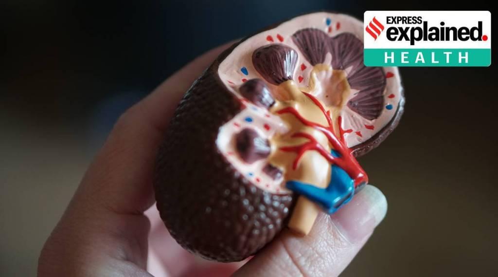 kidney cells, covid-19