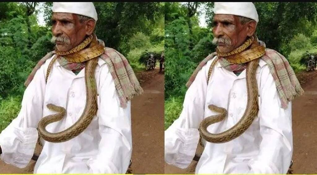 cobra viral video, viral videos, snake viral videos, karnataka