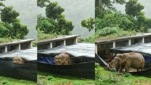 nilgiris, elephant corridor issue, today news, tamil news, tamil nadu news