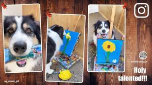 viral video of dog painting flower on canvas