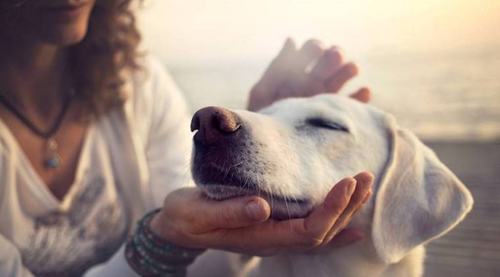 dogs care, dog growth, pets care, pet care, Canine care, how to treat your pets' wounds at home, செல்லப்பிரானி, நாய், நாயின் காயத்திற்கு சிகிச்சை அளிப்பது, வீட்டிலேயே நாய் காயத்துக்கு சிகிச்சை, நாய்களை பராமரிப்பது எப்படி, pets wounds, Learn how to treat some superficial dog wounds at home, dog wounds
