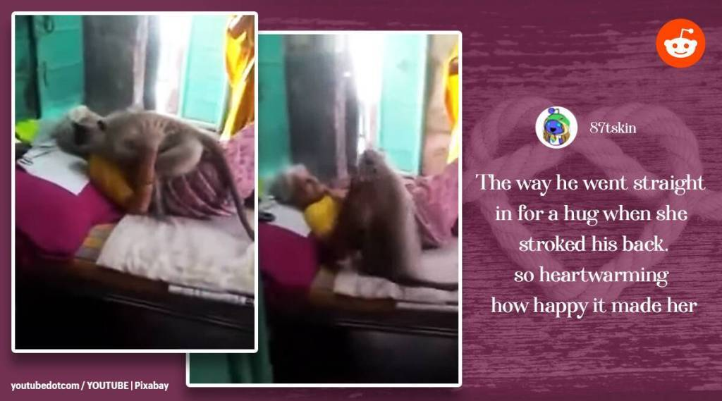 Trending viral video of langur hugs woman