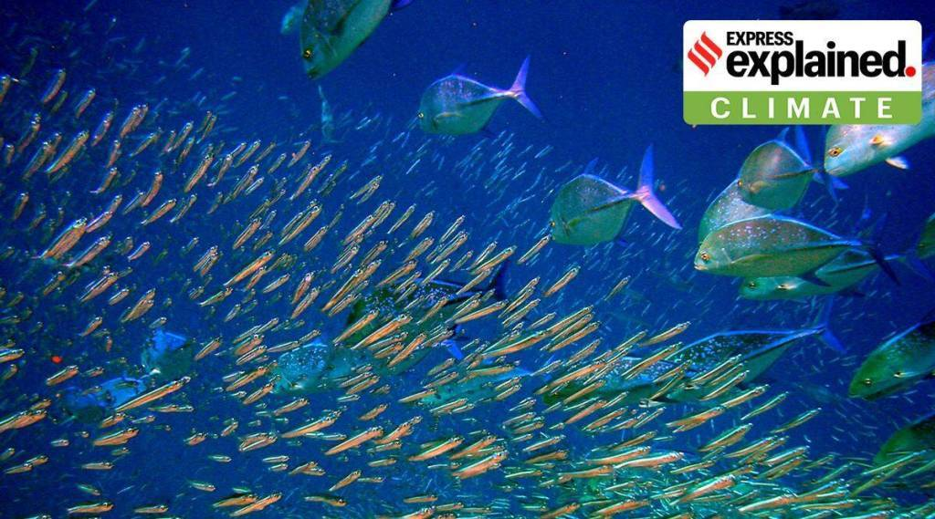 global warming What will happen to fish as oceans warm