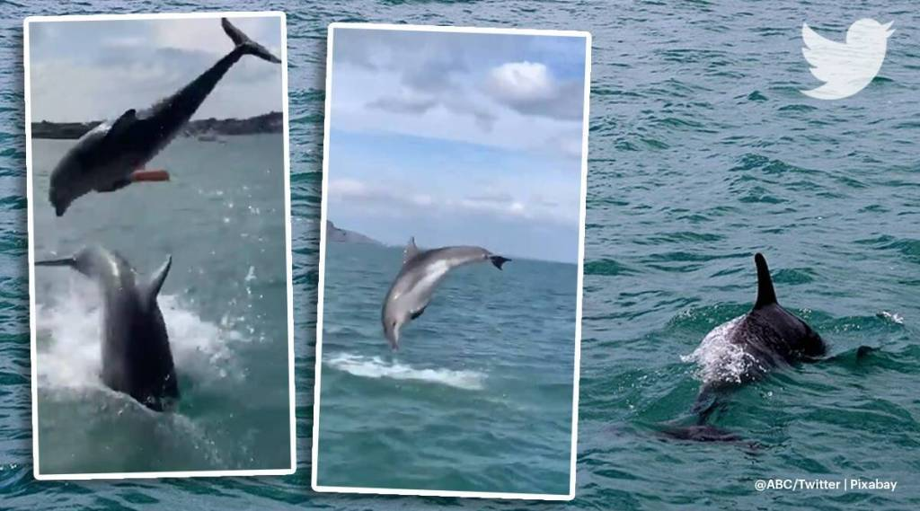 trending viral video of dolphins, viral video, trending viral videos