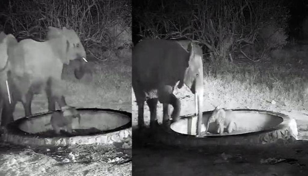 Elephant viral videos