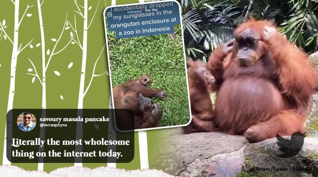 Orangutan viral video