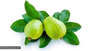 Tamil Health tips: Guava Health Benefits in tamil