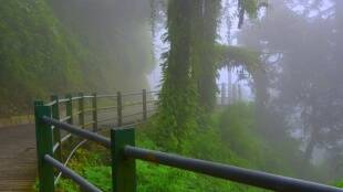 Nilgiris, rain, coimbatore, heavy rain alert, today news