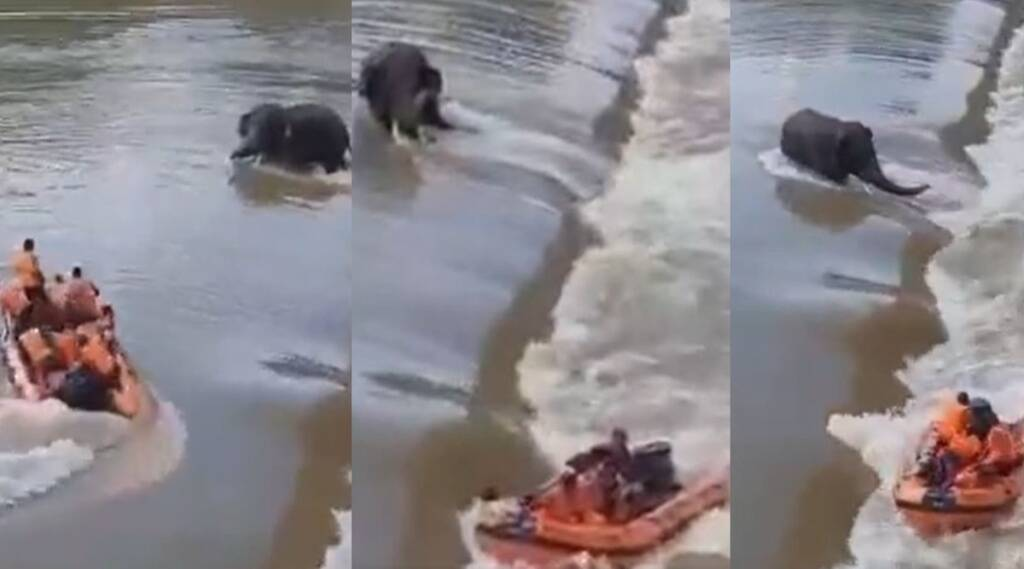 Video of of Elephant rescue attempt turns tragic