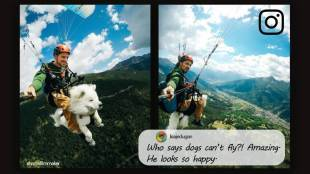viral video of cute dog paragliding