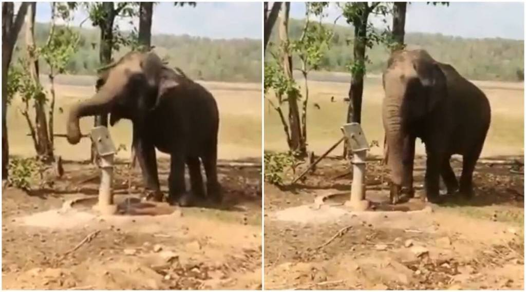 viral video of elephant drawing water from tubewell