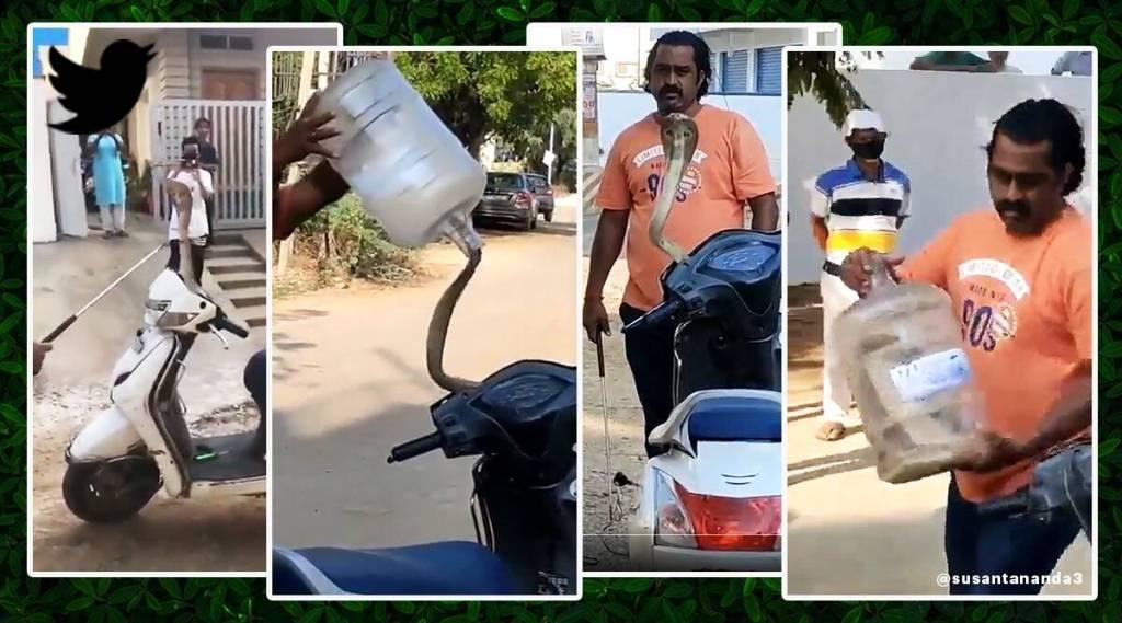 snake catching, viral video, trending viral video, viral tamil updates