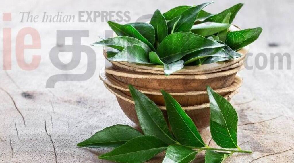 curry leaves benefits in tamil: curry leaf tea making in tamil