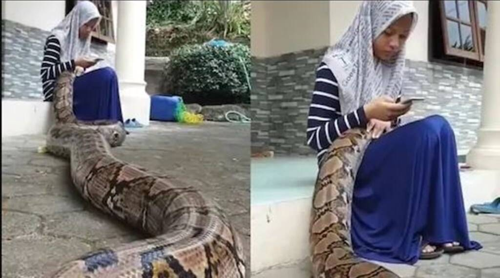 viral video, trending viral video, snake viral video, python viral videos