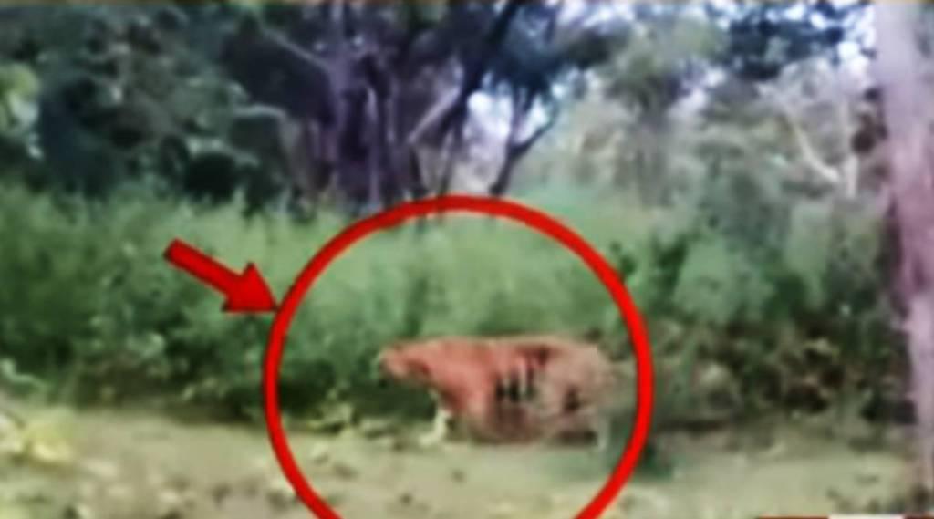 Forest department chief Order to shoot the tiger, man eater tiger, tiger killed 4 people, masinagudi, mudumali, nilgiri, ootacamund, tiger, 4 பேர்களை கடித்துக் கொன்ற ஆட்கொல்லி புலி, ஆட்கொல்லி புலி, ஆட்கொல்லி புலியை சுட்டுக்கொல்ல உத்தரவு, Tiger, Tiger news, tamil nadu, man eater tiger news, d23 tiger