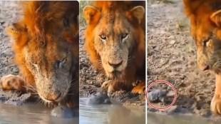 viral video, trending viral video, viral videos online, lion videos