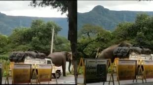 Viral video, trending viral video, elephant viral videos