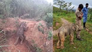 Elephant viral video, viral videos online, online viral videos