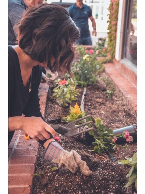 gardening - unsplash (1)