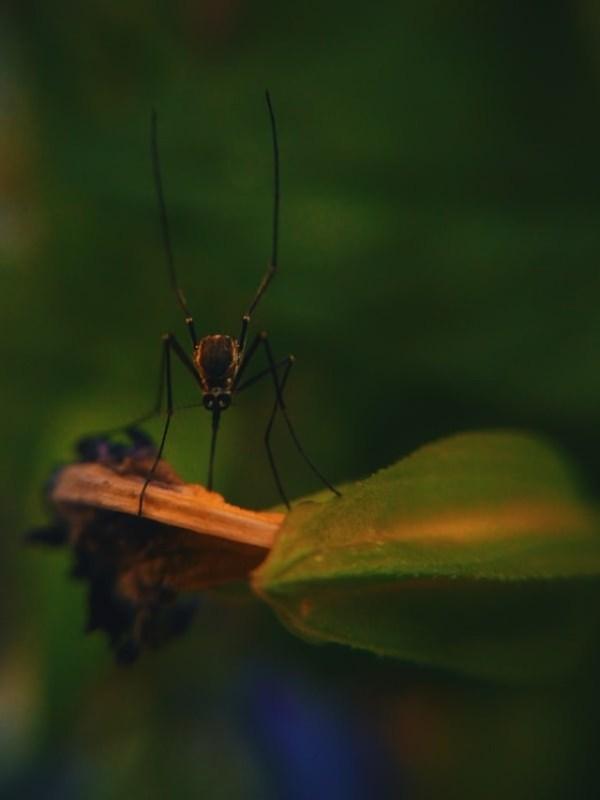 mosquitoe - unspalsh (1)