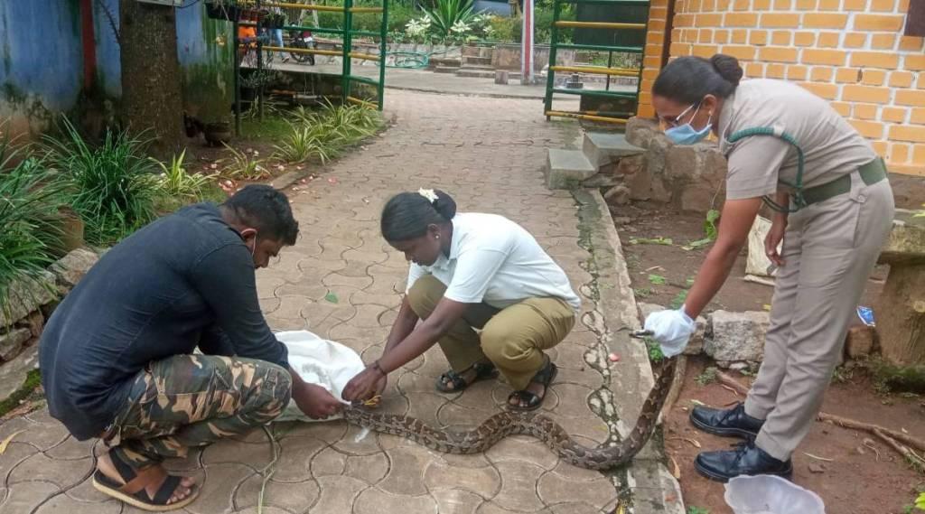 Tamil nadu women foresters bravely saved python, kanyakumar womer forester saved python, கன்னியாகுமரி, பெண் வன காவலர்கள், மலைப்பாம்பை காப்பாற்றிய பென் வன காவலர்கள், மலைப் பாம்பு, women foresters of kanyakumari forest bravely saved which entangled in net, python saved, viral photo, python saved photo, netizen wishes women foresters