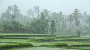 Chennai rains, weather forecast, tamil nadu