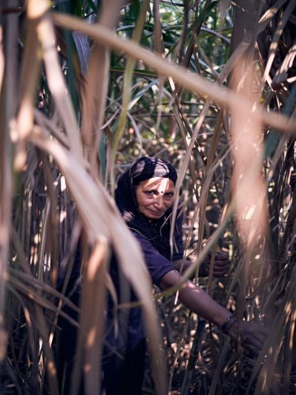 sugarcane - unsplash (1)