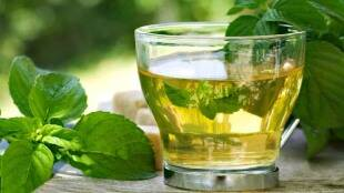 Weight loss drinks tamil: How and when to have green tea in tamil