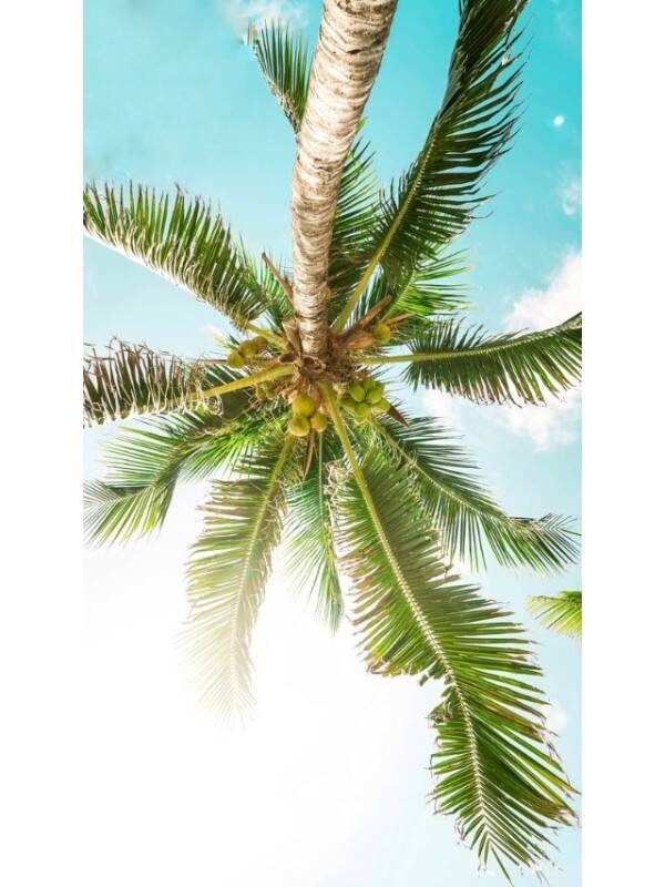tender coconut - unsplash (1)